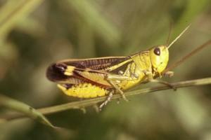 Adjudicación de Estudio FIA Insectos